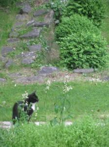 Kitty in a garden!
